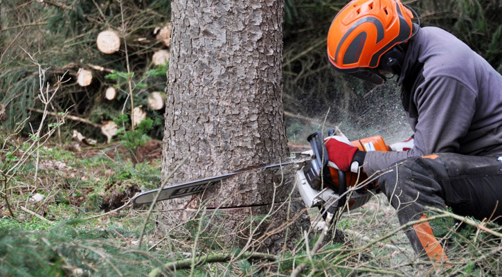 tree feller cutting a tree stump